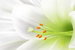عکس های زیبا وشگفت انگیز از گل های زیبا