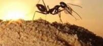 دعای مورچه برای نزول باران