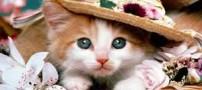 درآمدزایی از طریق اخموترین گربه جهان (عکس)