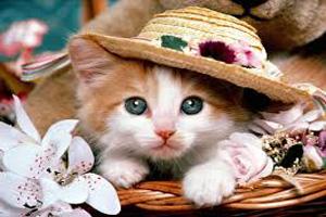 گربه اخموی که باعث درآمد برای صاحبش شد!+عکس