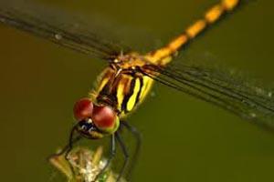 دانستنی های جالب درباره حشرات