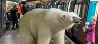 قدم زدن خرس قطبی در خیابان های لندن (عکس)