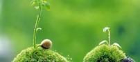 جملات کوتاه و پندآموز از فردوسی