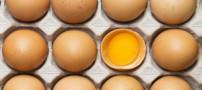 این مزایای تخم مرغ را می دانید؟
