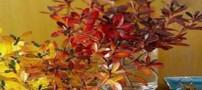 فواید استفاده از گل و گیاه در خانه