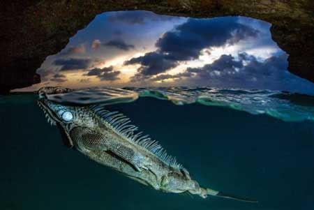 تصاویری از شگفت انگیز ترین حیوانات دیدنی دنیا
