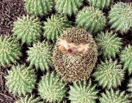 تصاویری از جالب ترین استتار حیوانات