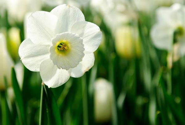 عکس هایی بسیار زیبا از گل های رنگارنگ