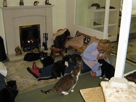 تاسیس جالب خانه سالمندان برای گربه ها! (عکس)