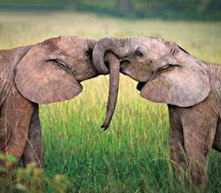 زیباترین تصاویر عاشقانه و منتخب روز عشق