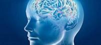 از چه سنی عملکردهای مغز افت می کند؟