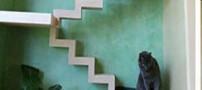 خلاقیت مردی برای نجات گربه ها (عکس)