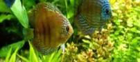 ماهی ها چقدر حافظه دارند؟