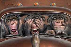 میمونی که توسط این زوج میلیاردر شد! عکس