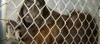 به راه انداختن باغ وحش در خانه شخصی (عکس)