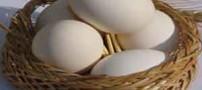 چرا مرغ بیضی شکل است؟