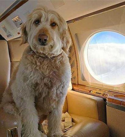 پولدارترین سگ های اینستاگرام (تصاویر)