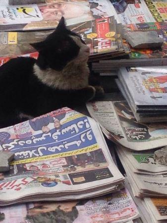 گربه روزنامه خوان خیابان های تهران ! (عکس)