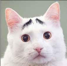 [عکس: Cats-that-were-subject-to-the-eyebrows-J...-com-2.jpg]