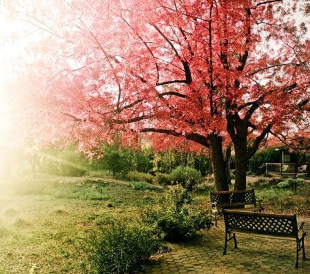 عکس های چشم نواز و دیدنی به مناسبت فصل بهار