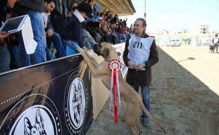 عکس های از جشنواره سگ های وحشی در اصفهان