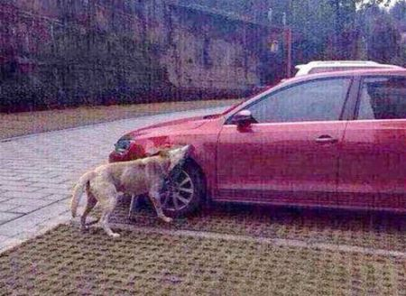 عکس هایی از انتقام گرفتن به روش سگی