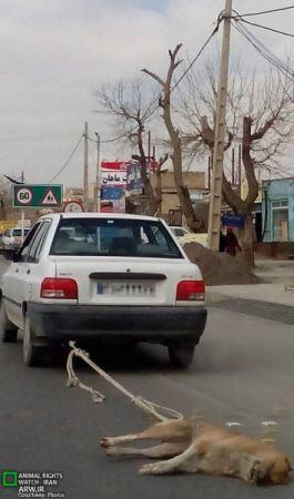 انتشار تصویر دلخراش از یک سگ در جاده مشهد (عکس)