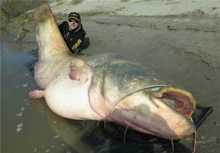 صید دیدنی ماهی 127 کیلویی توسط ماهیگیران !