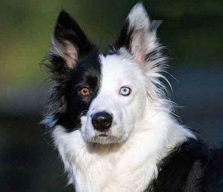 عکس هایی دیدنی از حیوانات چشم دو رنگی!