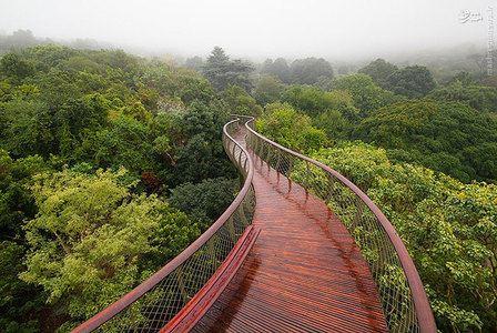 قدم زدن بر روی زیباترین درختان جنگل (عکس)