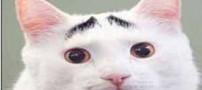 گربه ای که با ابروهای جالبش سوژه شد (عکس)