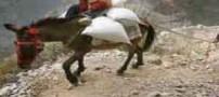 اعتماد به خر تا سر حد مرگ (عکس)