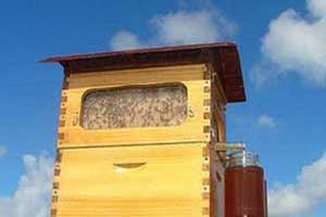 تولید عسل با گردش یک کلید فناوری شده در کندو!