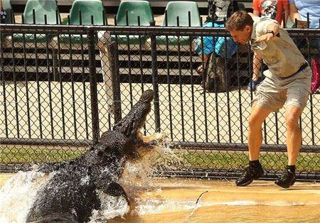 جشن تولد پسر شجاع با تمساح (عکس)