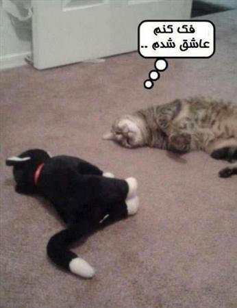 خنده دارترین عکس های جدید