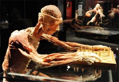 موزه انسان های پوست کنده! عکس (18-)
