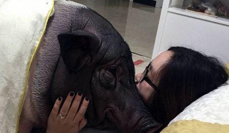 رابطه چندش آور و عاشقانه این دختر با خوک (عکس)