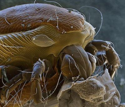 ترسناک ترین موجودات دیدنی اطراف ما (عکس)