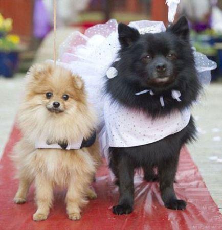 جشن عروسی بامزه حیوانات (عکس)