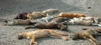 جنجال کشتار وحشیانه سگ ها با اسید در شیراز (عکس)