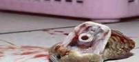 مار عجیبی که 20 دقیقه بعد از مرگش قاتلش را کشت! عکس