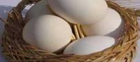 معجزه مصرف 4 تخم مرغ در  هفته