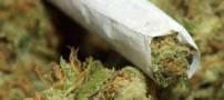 تجربیات تلخ و واقعی از مصرف مخدر گل!