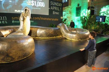 مارهای 60 میلیون سال پیش این شکلی بودند! (عکس)