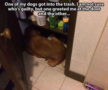 عکس هایی بامزه از حیوانات نادم و پشیمان!!