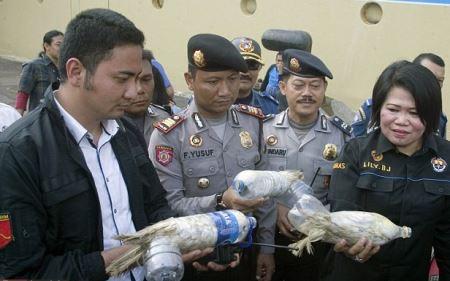 قاچاق دردناک طوطی در بطری آب (عکس)