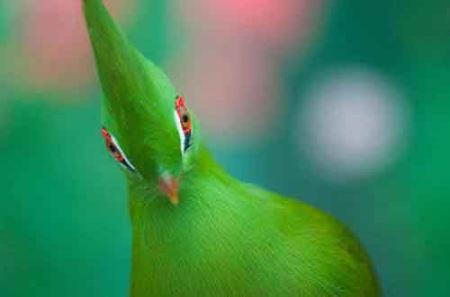 عکس های زیباترین پرنده بهشتی