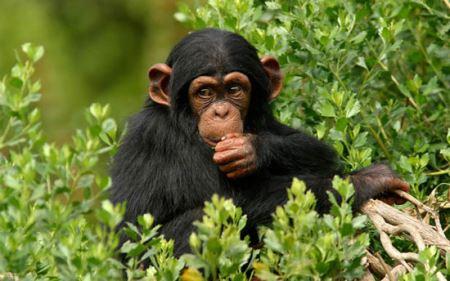 نتایج بسیار عجیب مقایسه انسان با حیوانات! (عکس)