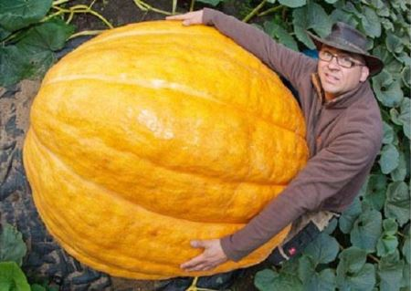 رشد باورنکردنی این کدو تا 320 کیلو!! عکس