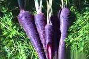 خواص زردک و هویج